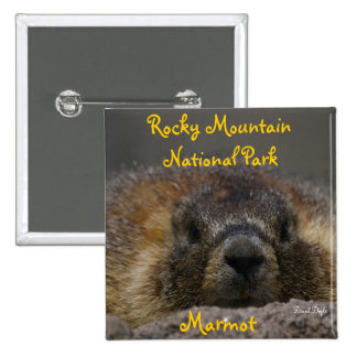 Marmot at Rocky Mountian National Park Pinback Button