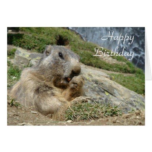 Marmot birthday card