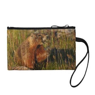 marmot eating grass coin purse