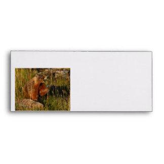 marmot eating grass envelope