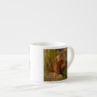 marmot eating grass espresso cup