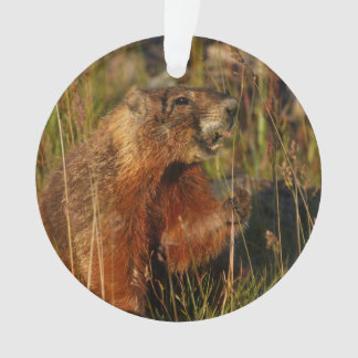 marmot eating grass ornament