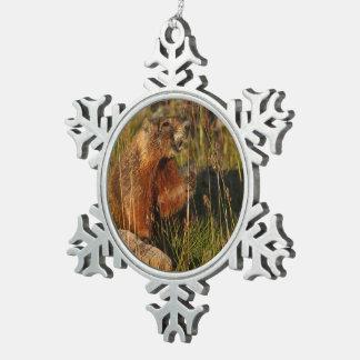 marmot eating grass snowflake pewter christmas ornament