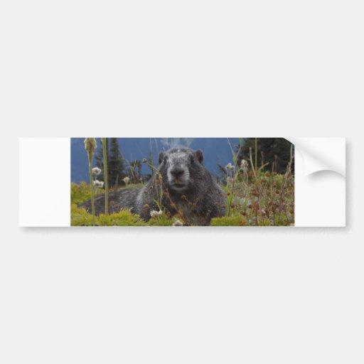 marmot in paradise car bumper sticker