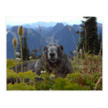 marmot in paradise postcard