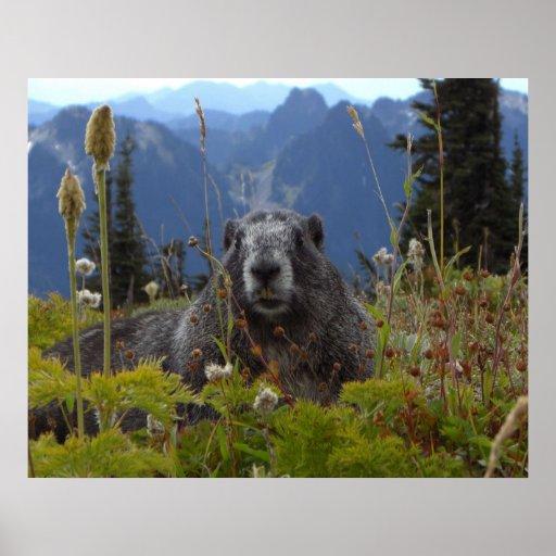 Marmot In Paradise Print