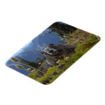 Marmot In Paradise Rectangle Magnet