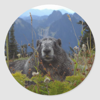 marmot in paradise round stickers