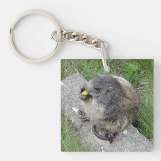 Marmot key chain