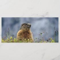 marmot on alpine meadow