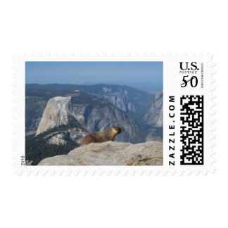 Marmot Overlooking Half Dome from Clouds Rest Postage