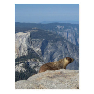 Marmot Overlooking Half Dome from Clouds Rest - Yo Postcard