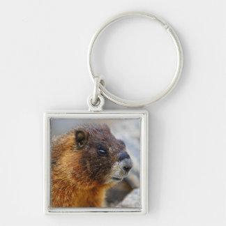 marmot portrait key chains