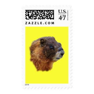 Marmot Portrait Postage