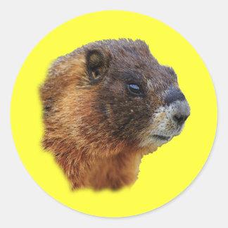 Marmot Portrait Round Sticker