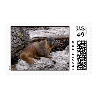 Marmot Postage