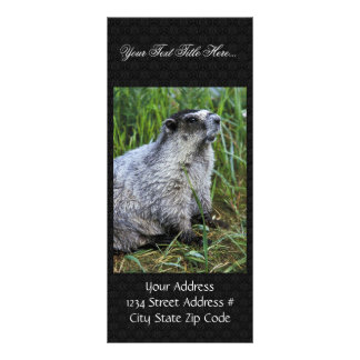 Marmot Rack Card