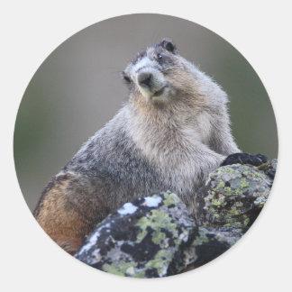 marmot sticker