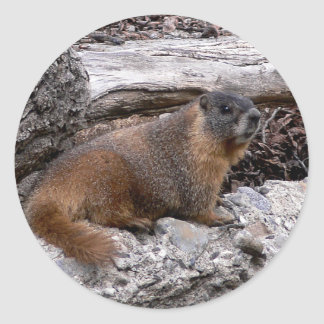 Marmot Round Stickers