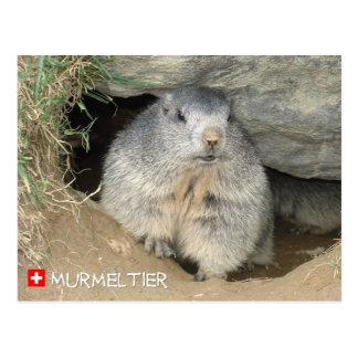 Marmot, Switzerland/Marmot, Switzerland Postcard
