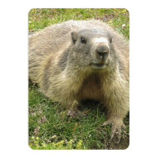 Marmot With Ticked Coloration And Cool Paws 5x7 Paper Invitation Card