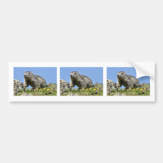 Marmota alpina joven etiqueta de parachoque
