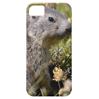 Marmota alpina joven en hierba iPhone 5 funda