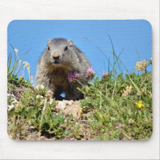 Marmota alpina joven alfombrilla de ratón