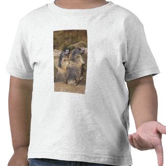 Marmota alpina marmota del Marmota adultos Saas Camisetas