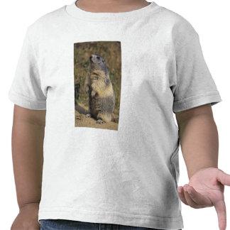 Marmota alpina marmota del Marmota situación adu Camiseta