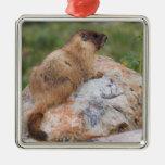 marmota Amarillo-hinchada, flaviventris del Adorno Cuadrado Plateado
