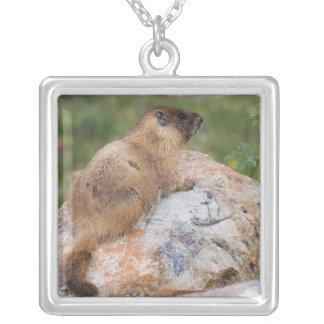 marmota Amarillo-hinchada, flaviventris del Marmot Pendiente Personalizado