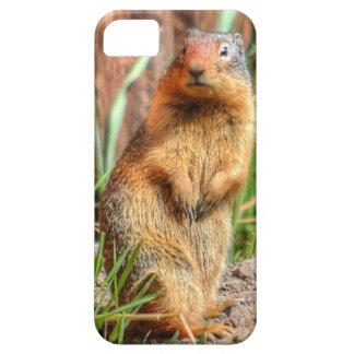 marmota Amarillo-hinchada por una foto de la fauna iPhone 5 Case-Mate Cárcasas