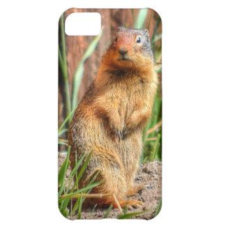 marmota Amarillo-hinchada por una foto de la fauna Funda Para iPhone 5C