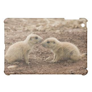Marmota atada negro de Prarie