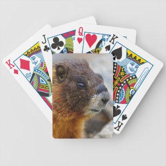 marmota baraja de cartas bicycle