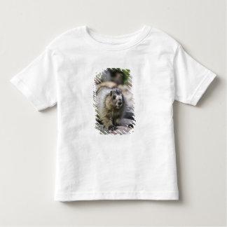 Marmota canosa, caligata del Marmota, joven con Remeras