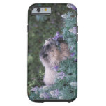 Marmota canosa que alimenta en el lupine sedoso, funda para iPhone 6 tough