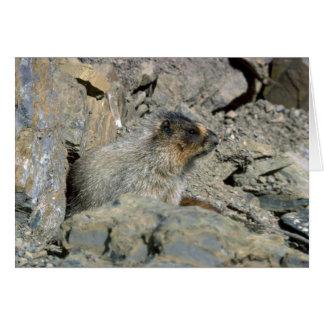 Marmota canosa tarjeta de felicitación