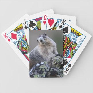 marmota de Alaska Baraja De Cartas Bicycle