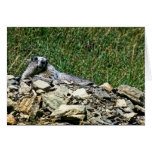 Marmota de Montana Tarjeta De Felicitación