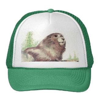 Marmota linda, naturaleza, fauna, animal gorras