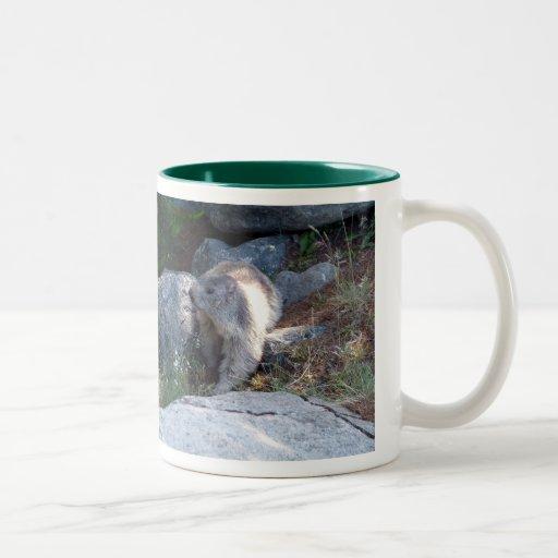 Marmota linda -- Taza suiza