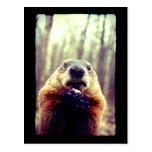 Marmota poco firme postales
