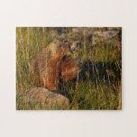 marmota puzzles