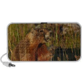 marmota que come la hierba altavoz de viaje