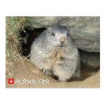 Marmota, Suiza, Marmot, Switzerland,/ Postal