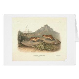 Marmotas de California por Audubon (0184A) Felicitación