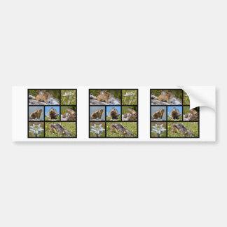 Marmotas y edelweiss alpinos del mosaico de las fo etiqueta de parachoque