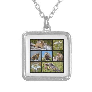Marmotas y edelweiss alpinos del mosaico de las fo pendiente